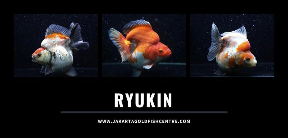 Ryukin